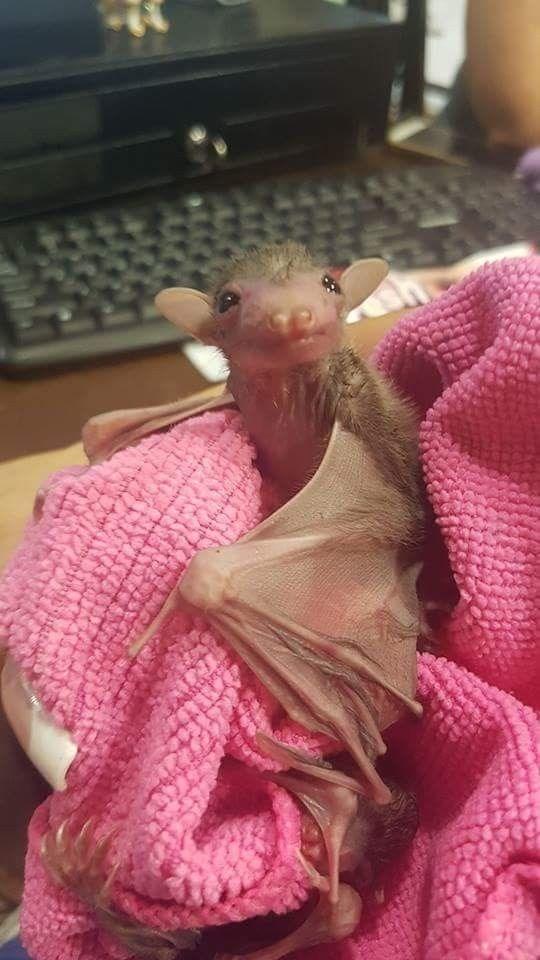 bats - Pink
