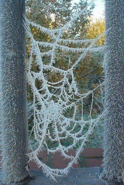 Spider web - www.