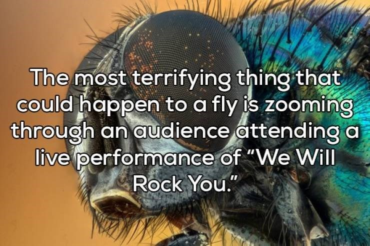 """Organism - The most terrifying thing that could happen to a fly is zooming through an audience attending a live performance of """"We Will Rock You."""""""