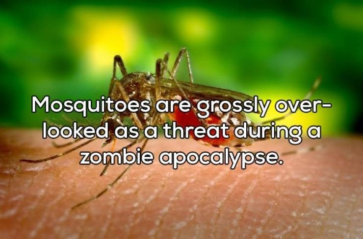 Shower thought about mosquitoes becoming extra dangerous during a zombie outbreak