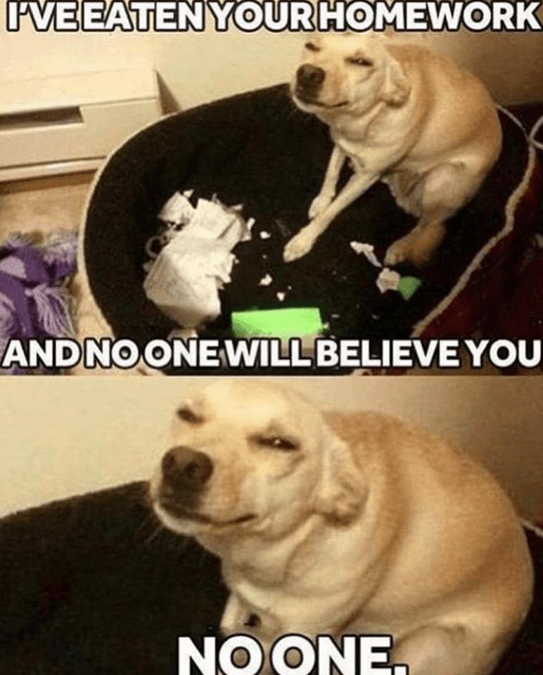 Dog - PVEEATENYOURHOMEWORK ANDNOONEWILL BELIEVE YOU NOONE