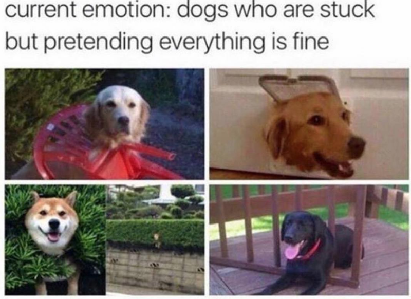 Dog breed - current emotion: dogs who are stuck but pretending everything is fine