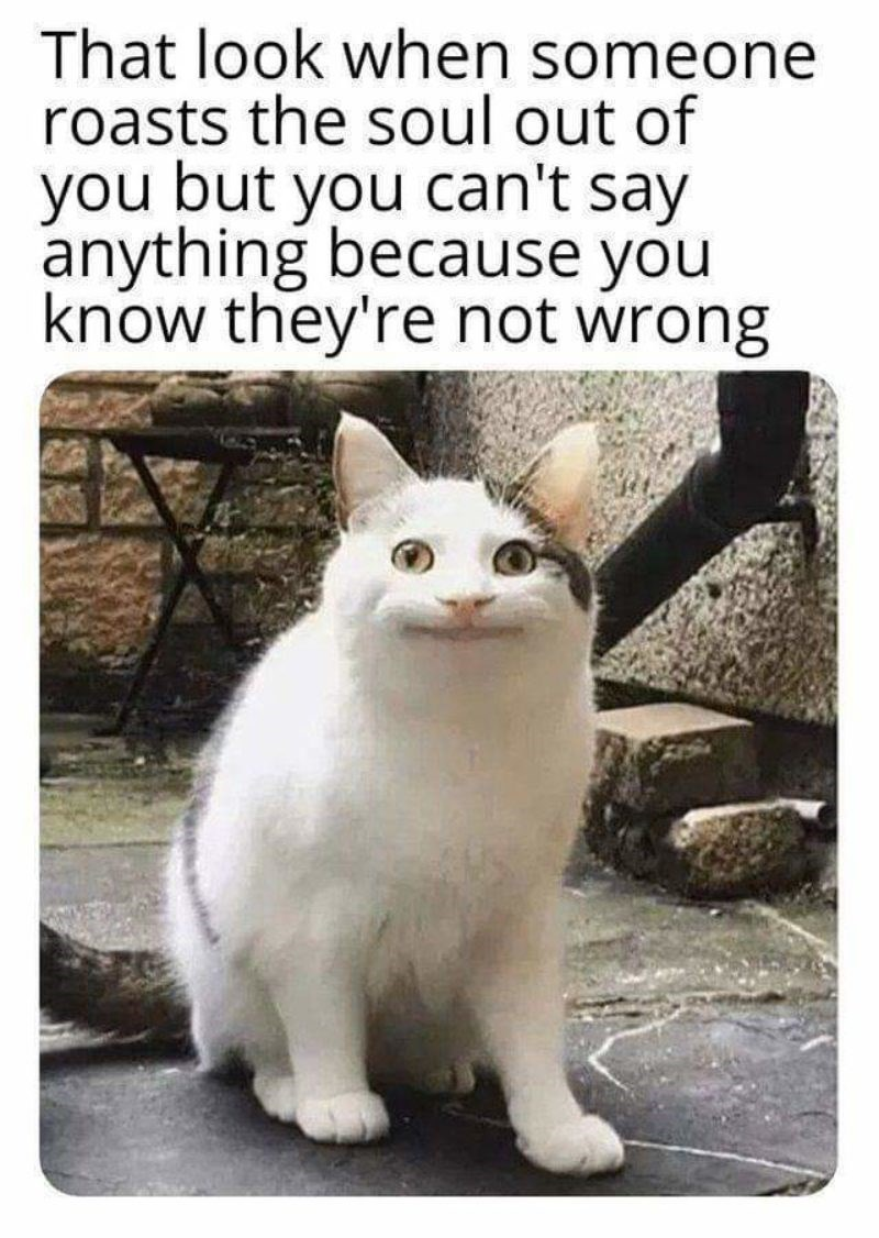 "Caption that reads, ""That look when someone roasts the soul out of you but you can't say anything because they're not wrong"" above a pic of Polite Cat"