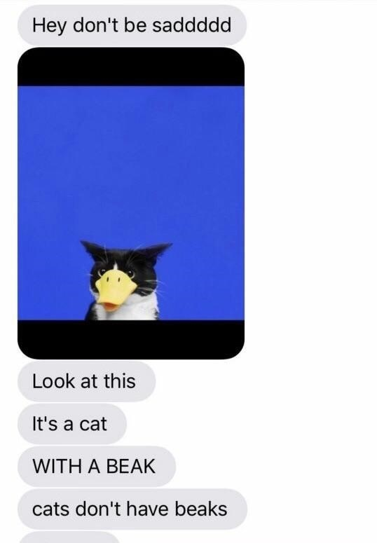 Font - Hey don't be saddddd Look at this It's a cat WITH A BEAK cats don't have beaks