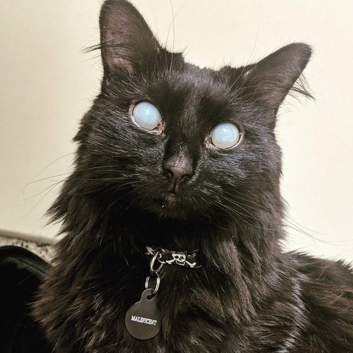 Cat - MALEFICENT