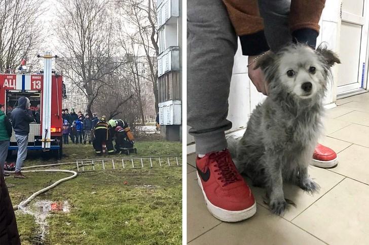 Dog - MHC SCK AL 13