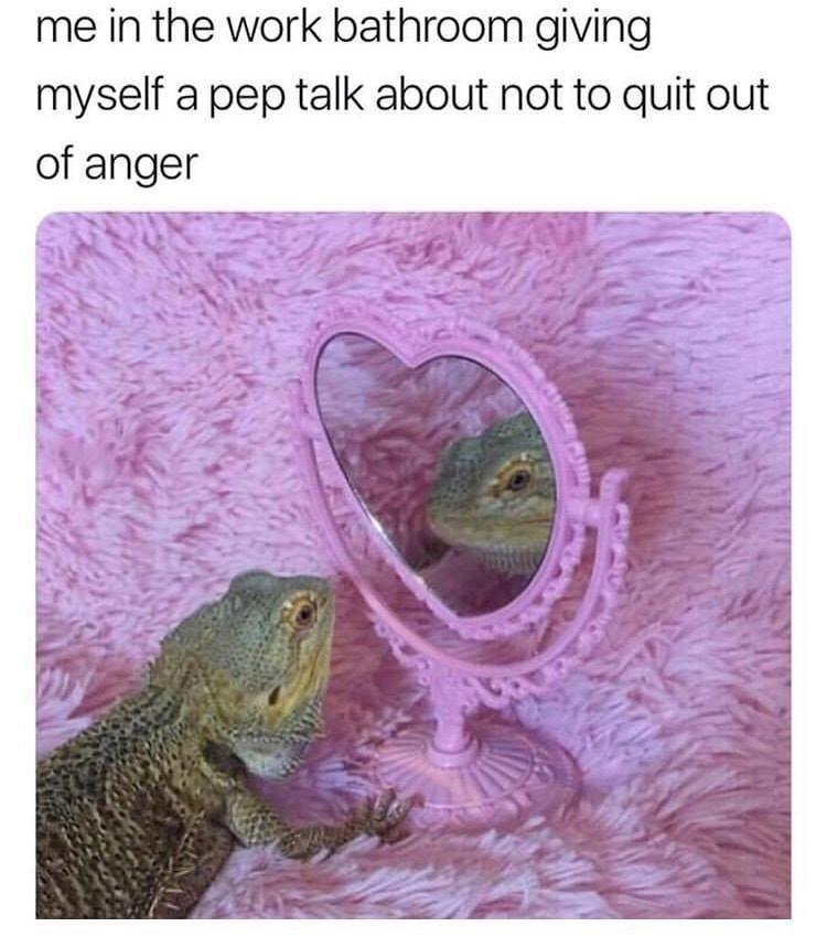 Funny work meme, lizard.