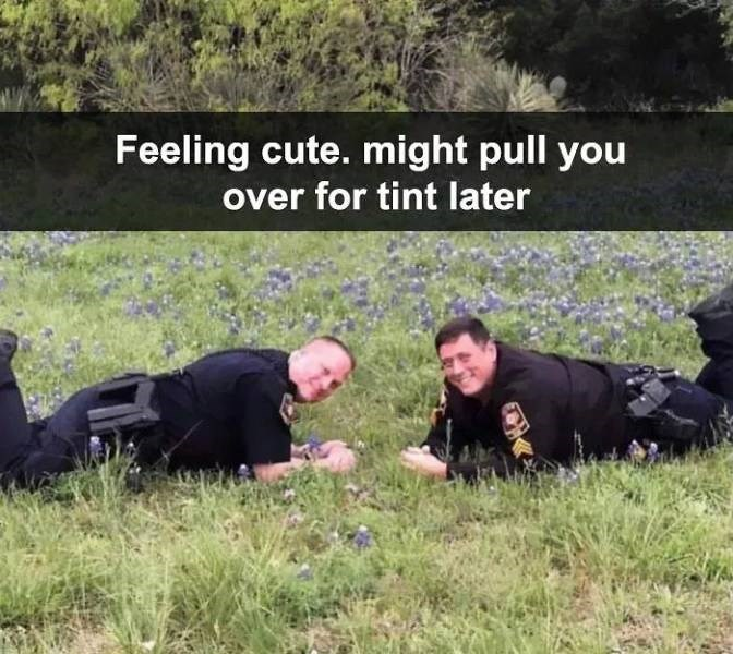meme - Grass - Feeling cute. might pull you over for tint later