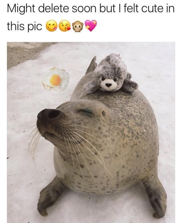 meme - Fur seal - Might delete soon but I felt cute in this pic
