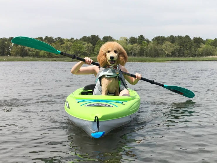 Kayak - OPallcan