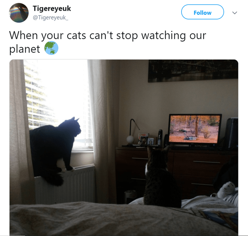 cat watching tv - Room - Tigereyeuk Follow @Tigereyeuk When your cats can't stop watching our planet