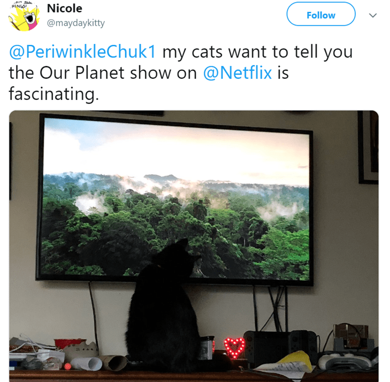 cat watching tv - Adaptation - Nicole HINGS Follow @maydaykitty @PeriwinkleChuk1 my cats want to tell you the Our Planet show on @Netflix is fascinating.