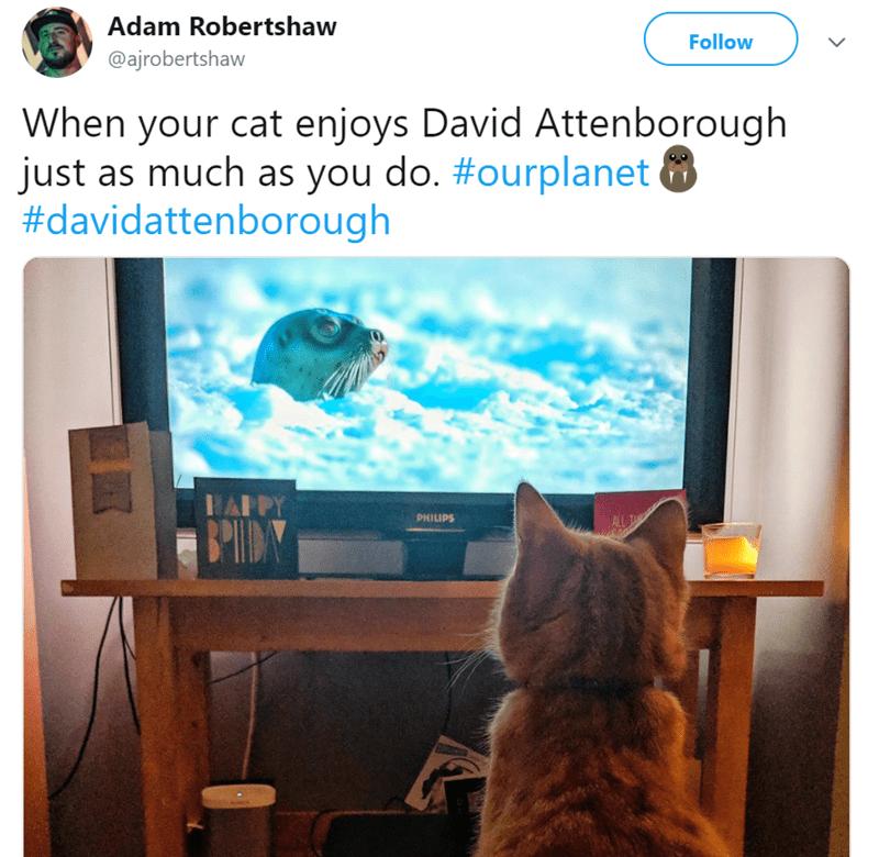 cat watching tv - Cat - Adam Robertshaw Follow @ajrobertshaw When your cat enjoys David Attenborough just as much as you do. #ourplanet #davidattenborough PHILIPS ALL T