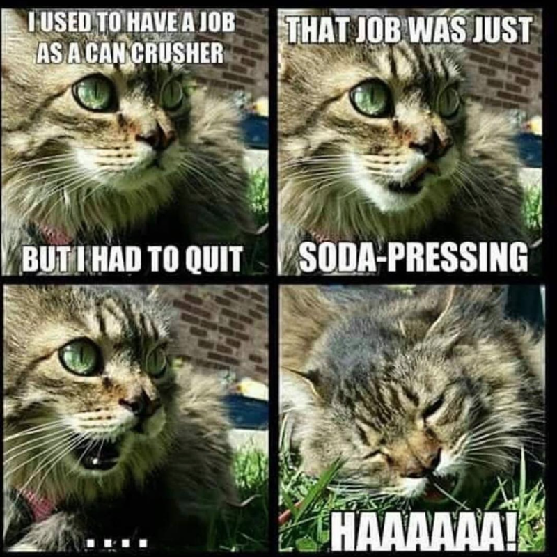 Cat - TUSED TO HAVE A JOB ASA CAN CRUSHER THAT JOB WAS JUST SODA-PRESSING BUTIHAD TO QUIT HAAAAAA!