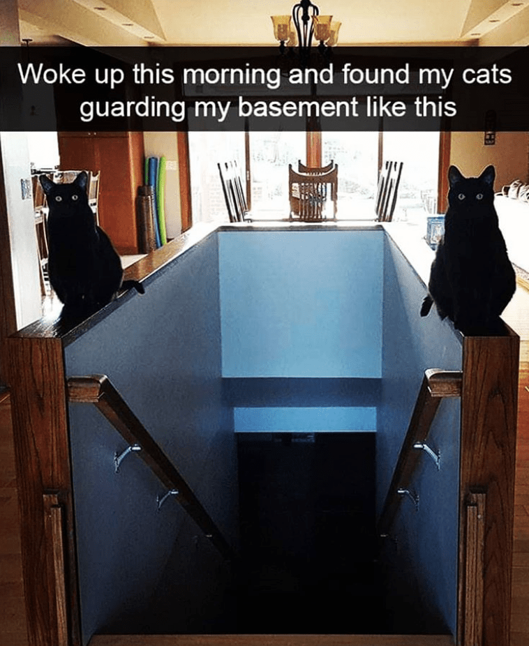 Product - Woke up this morning and found my cats guarding my basement like this