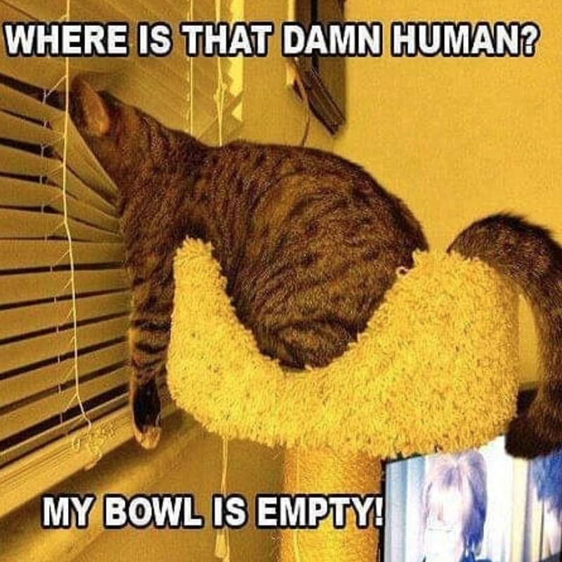 Photo caption - WHERE IS THAT DAMN HUMAN? MY BOWL IS EMPTY!