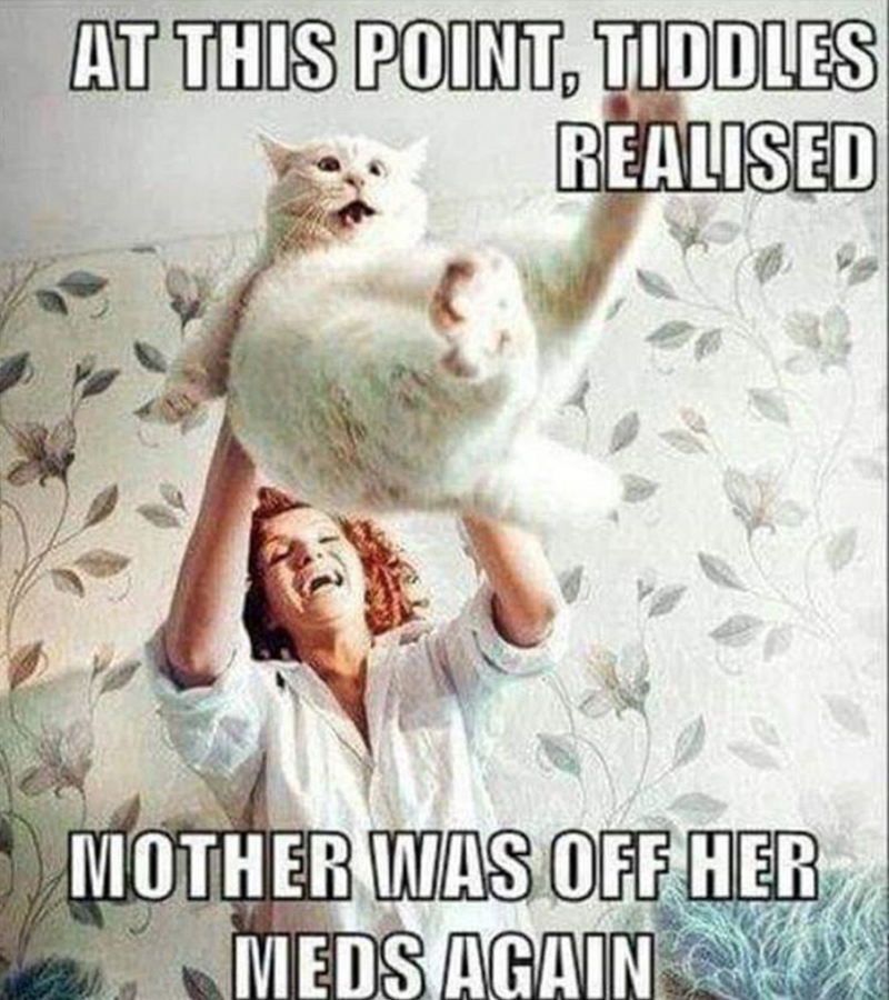 Cat - AT THIS POINT, TIDDLES REALISED MOTHER WAS OFF HER MEDS AGAIN