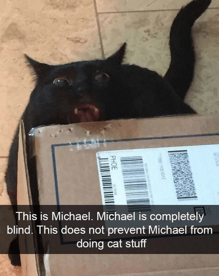 Cat - This is Michael. Michael is completely blind. This does not prevent Michael from doing cat stuff 705 1135 5312 PHOE