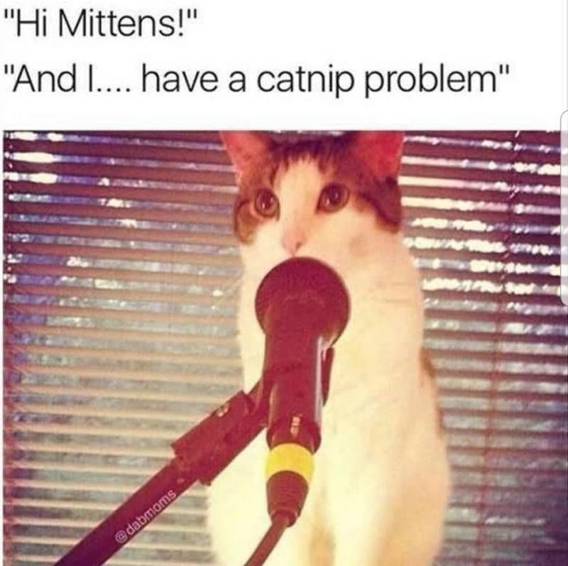 "Photo caption - ""Hi Mittens!"" ""And I.... have a catnip problem"" @dabmoms"