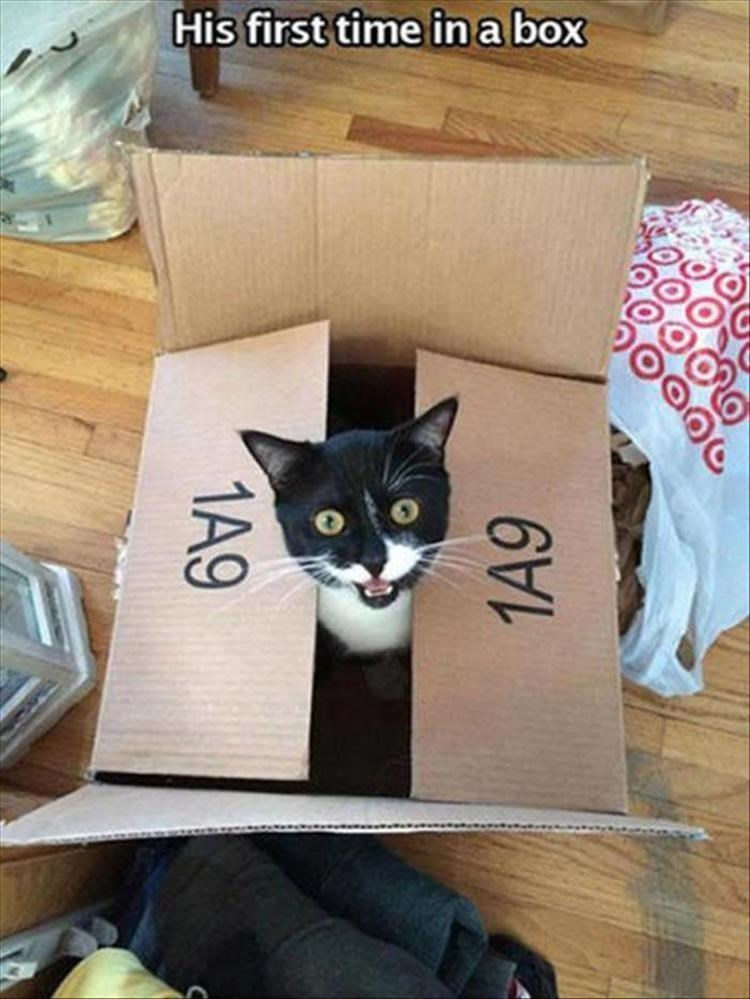 Cat - His first time ina box 19 6AM 1A9