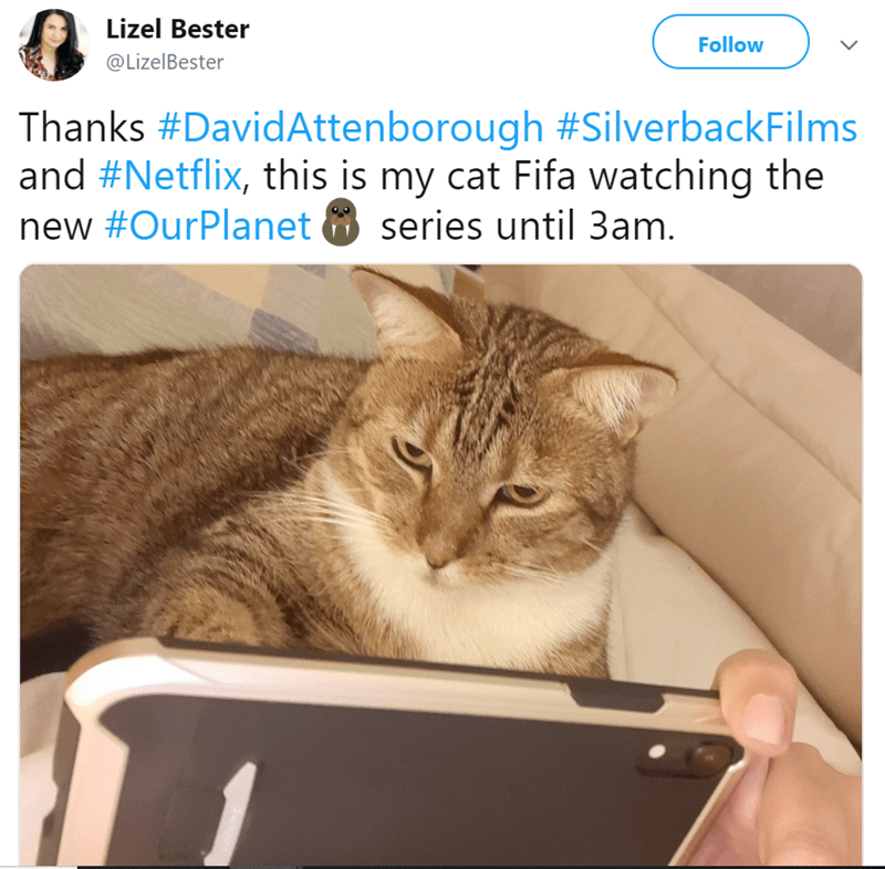 cat watching tv - Cat - Lizel Bester Follow @LizelBester Thanks #DavidAttenborough #SilverbackFilms and #Netflix, this is my cat Fifa watching the new #OurPlanet series until 3am.