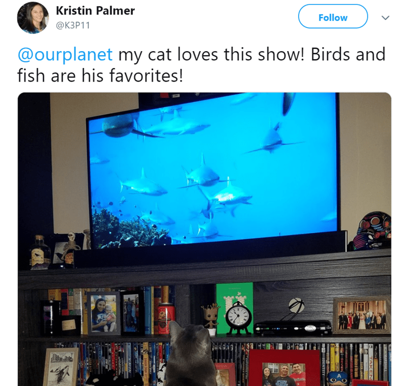 cat watching tv - Product - Kristin Palmer Follow ФКЗР11 @ourplanet my cat loves this show! Birds and fish are his favorites! Teow RSHALL TAKEN e sinsce be janhs DENTITY RRAN JunK ARK