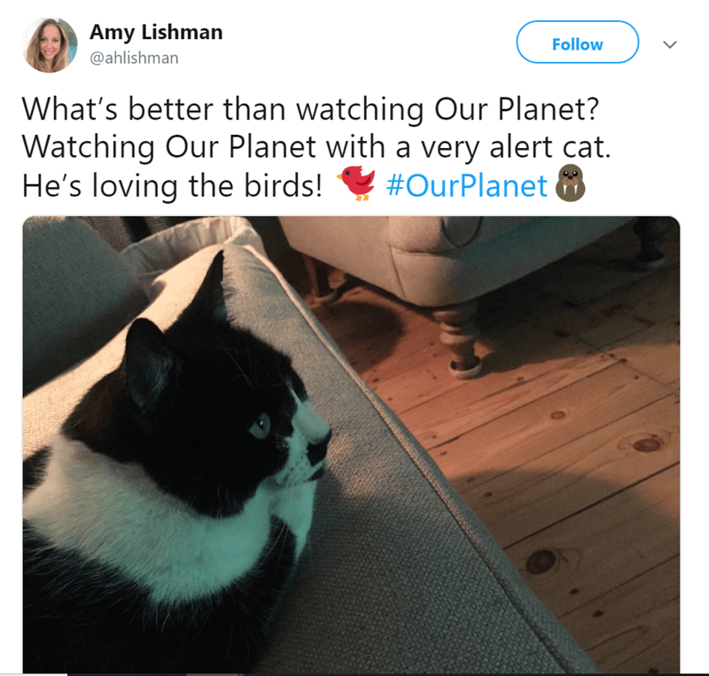 cat watching tv - Cat - Amy Lishman Follow @ahlishman What's better than watching Our Planet? Watching Our Planet with a very alert cat. He's loving the birds! ! #OurPlanet