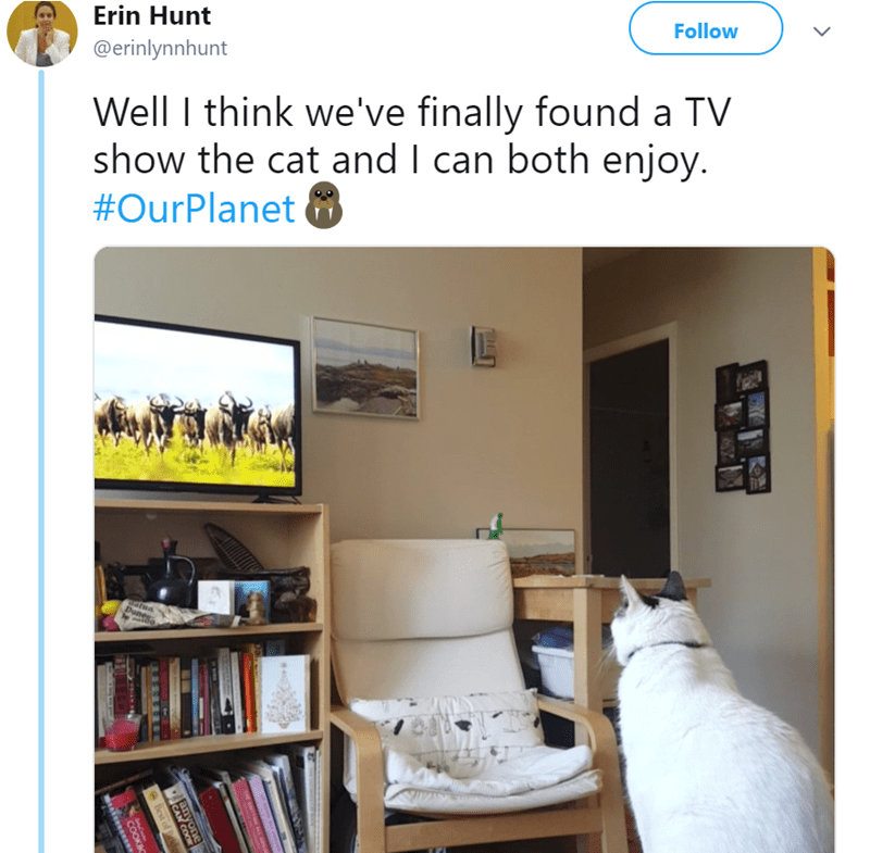 cat watching tv - Property - Follow Erin Hunt @erinlynnhunt Well think we've finally found a TV show the cat and I can both enjoy. #OurPlanet Donee lest of d