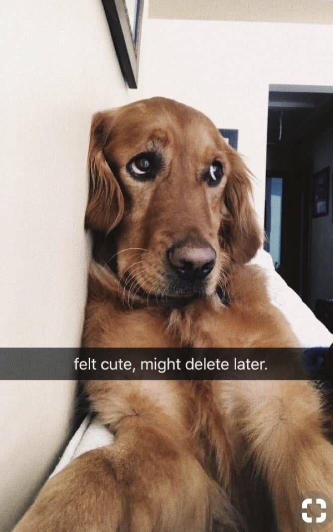 Dog - felt cute, might delete later. 33