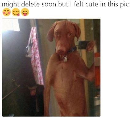 Dog - might delete soon but I felt cute in this pic