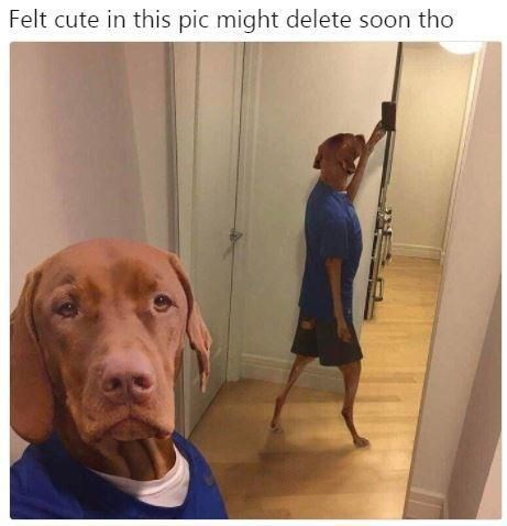 Vizsla - Felt cute in this pic might delete soon tho