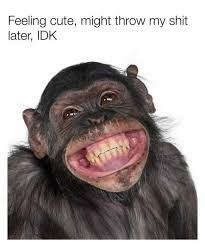 Common chimpanzee - Feeling cute, might throw my shit later, IDK