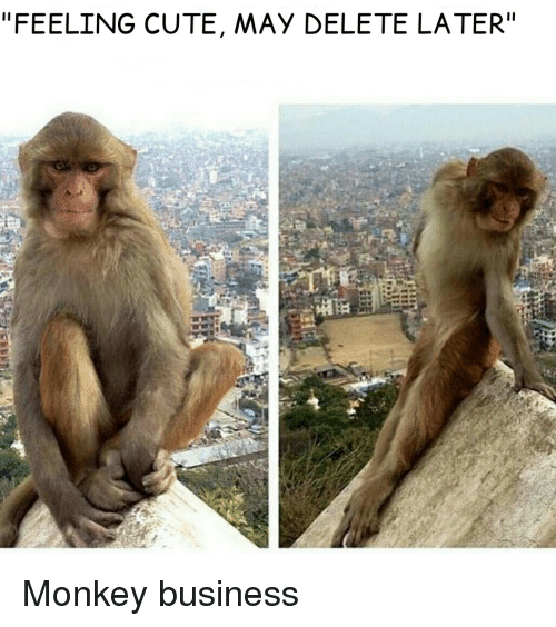 """Rhesus macaque - """"FEELING CUTE, MAY DELETE LATER"""" Monkey business"""