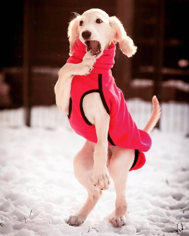 perfect timing pics - Dog