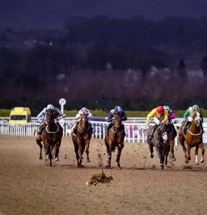 perfect timing pics - Horse