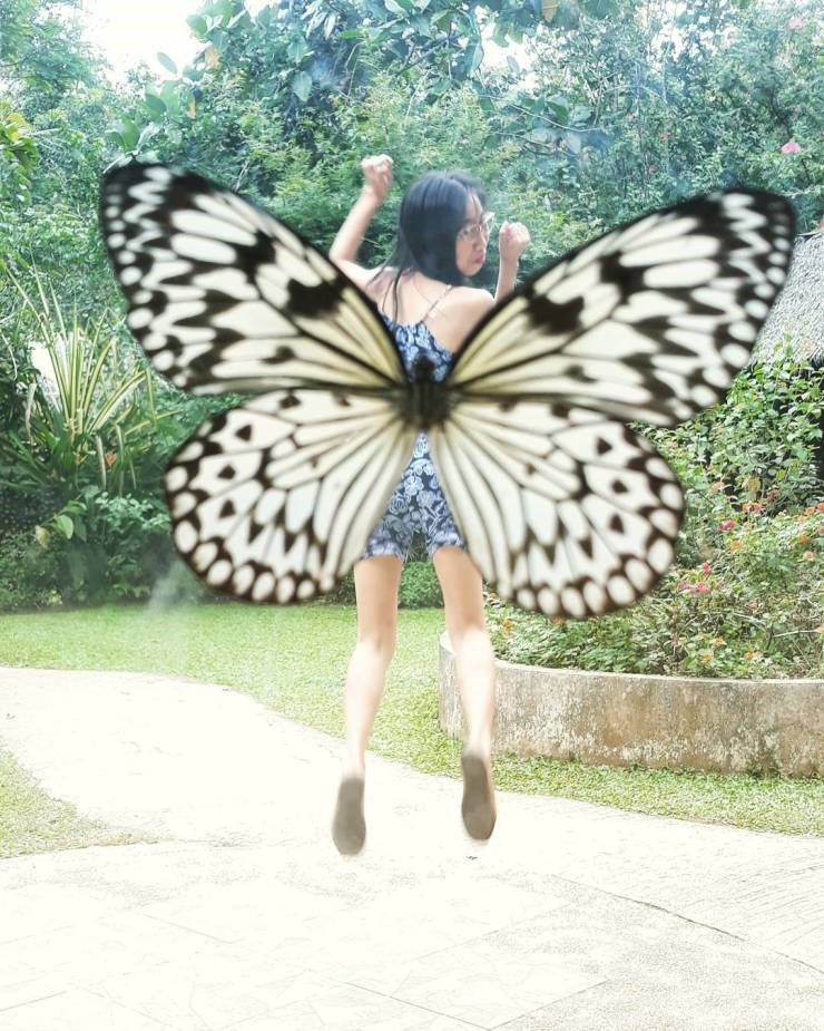 perfect timing pics - Butterfly