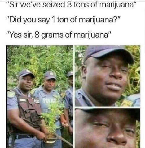 420 memes with a cop that looks high while holding a marijuana plant