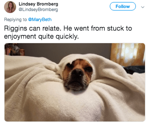 Dog - Lindsey Bromberg LindseyBromberg Follow Replying to @MaryBeth Riggins can relate. He went from stucl enjoyment quite quickly.