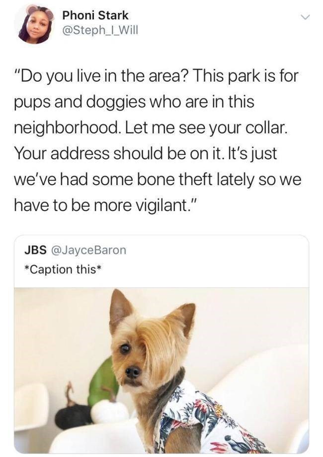 "Dog breed - Phoni Stark @Steph_LWill ""Do you live in the area? This park is for pups and doggies who are in this neighborhood. Let me see your collar. Your address should be on it. It's just we've had some bone theft lately so we have to be more vigilant."" JBS @JayceBaron *Caption this*"