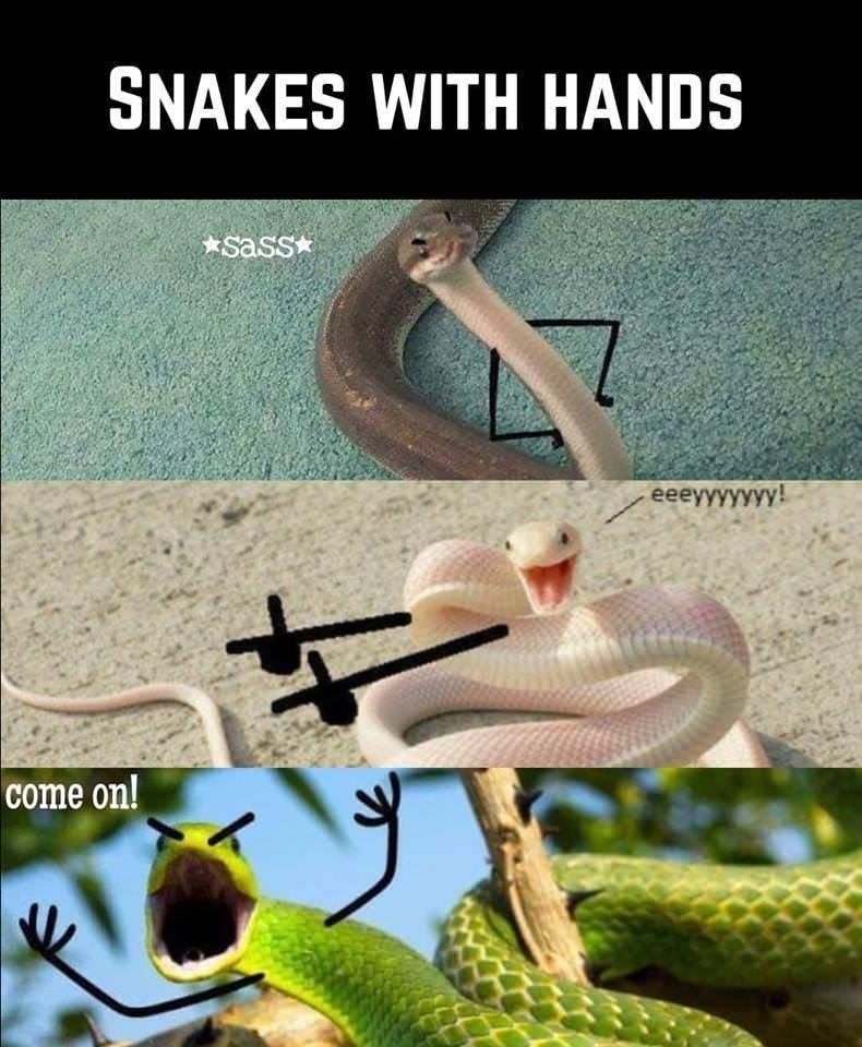 Imagini amuzante si haioase - Who Knew Snakes Could Be So Cute