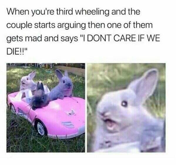 Easter meme of three bunnies in a toy car