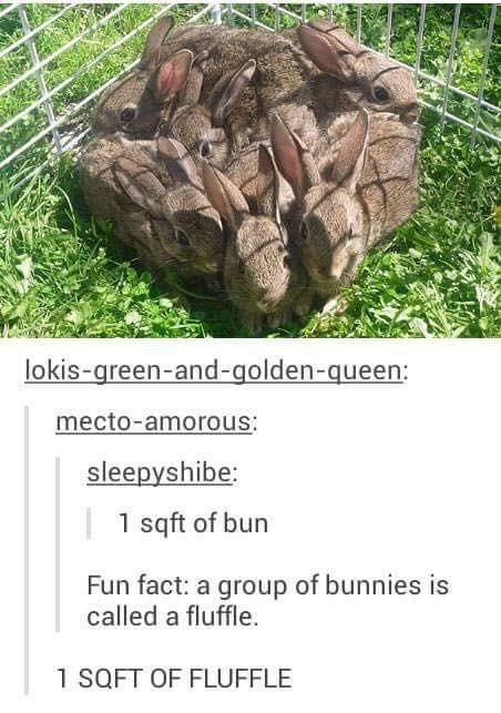 Easter meme of bunnies forming a shape