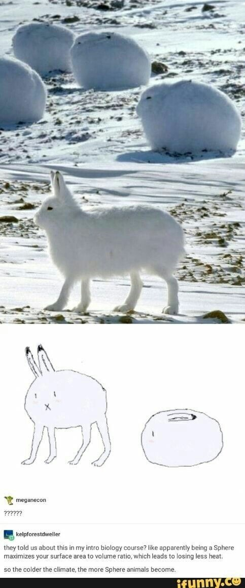 Easter meme of absolute unit of a bunny