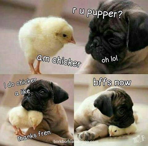 Easter meme of a puppy hanging out with a chick