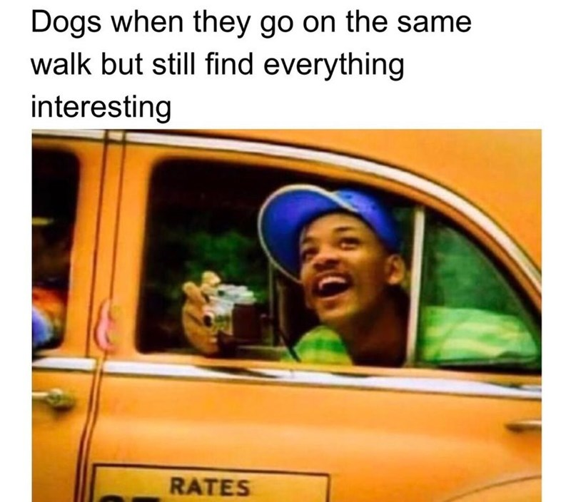 "Caption that reads, ""Dogs when they go on the same walk but still find everything interesting"" above a still of Will Smith from 'The Fresh Prince' taking a photo out of a cab"