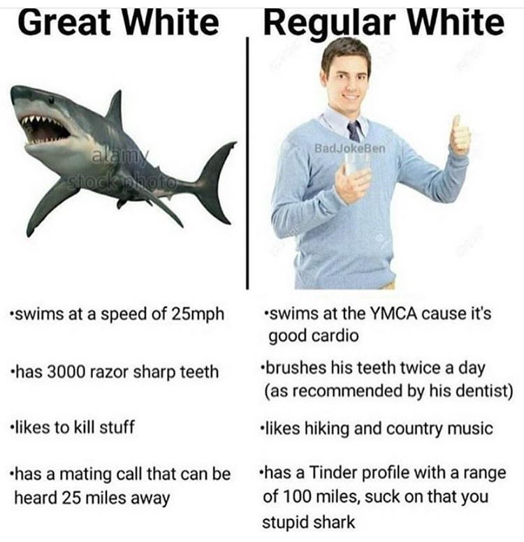 dank memes - Fish - Great White Regular White BadJokeBen alamy stiock photo swims at the YMCA cause it's swims at a speed of 25mph good cardio brushes his teeth twice a day (as recommended by his dentist) has 3000 razor sharp teeth likes to kill stuff likes hiking and country music has a Tinder profile with a range of 100 miles, suck on that you has a mating call that can be heard 25 miles away stupid shark