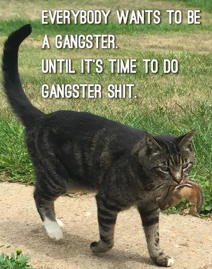 Cat - EVERYBODY WANTS TO BE A GANGSTER UNTIL IT'S TIME TO DO GANGSTER SHIT