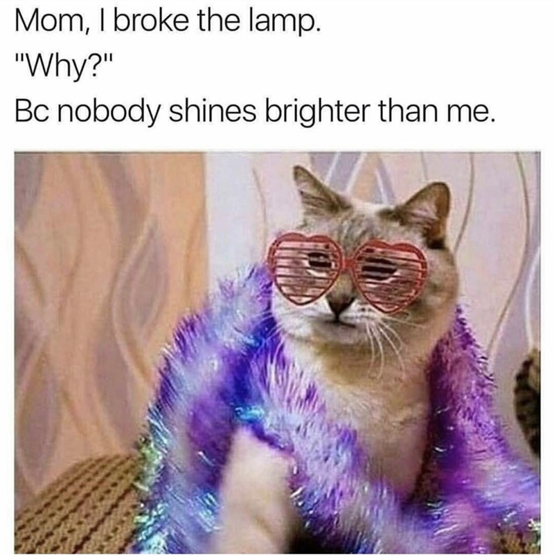 random meme of a cat wearing glasses and a scarf