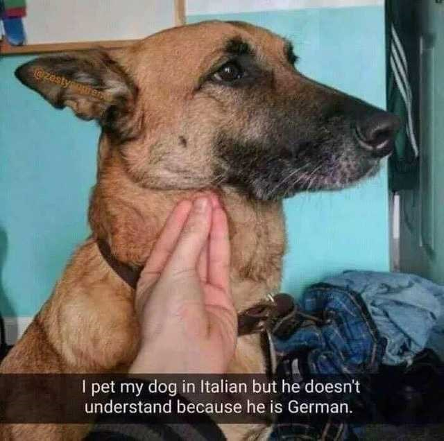 """Pic of a German Shepherd being pet with Snapchat text that reads, """"I pet my dog in Italian but he doesn't understand because he is German"""""""