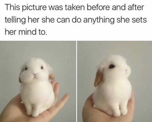 Domestic rabbit - This picture was taken before and after telling her she can do anything she sets her mind to.